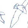blue sea gullssoaring over a whitebackground