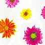 contemporary flower pattern pvc free / peva shower curtain