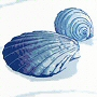 seashell beach theme non toxic fabric shower curtain