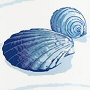 non toxic seashell shower curtian great for childrens bathroom
