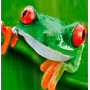frog shower curtain pvc free PEVA