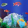 beach themed non toxic kids shower curtain with reef fish and coral